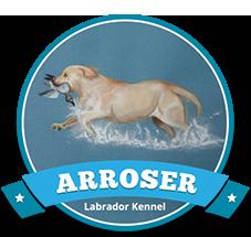 Arroser Labrador Breeders
